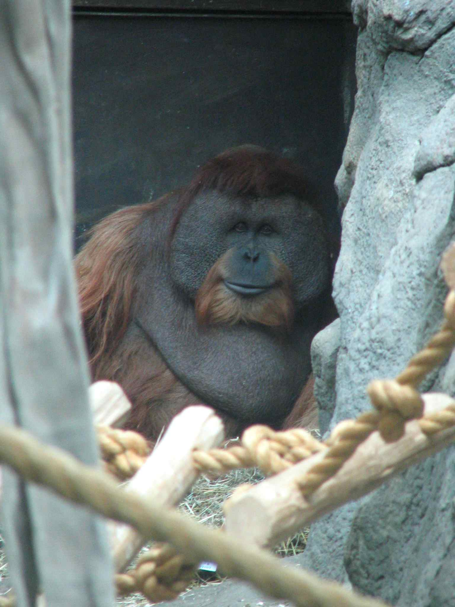 Photo of Orangutan