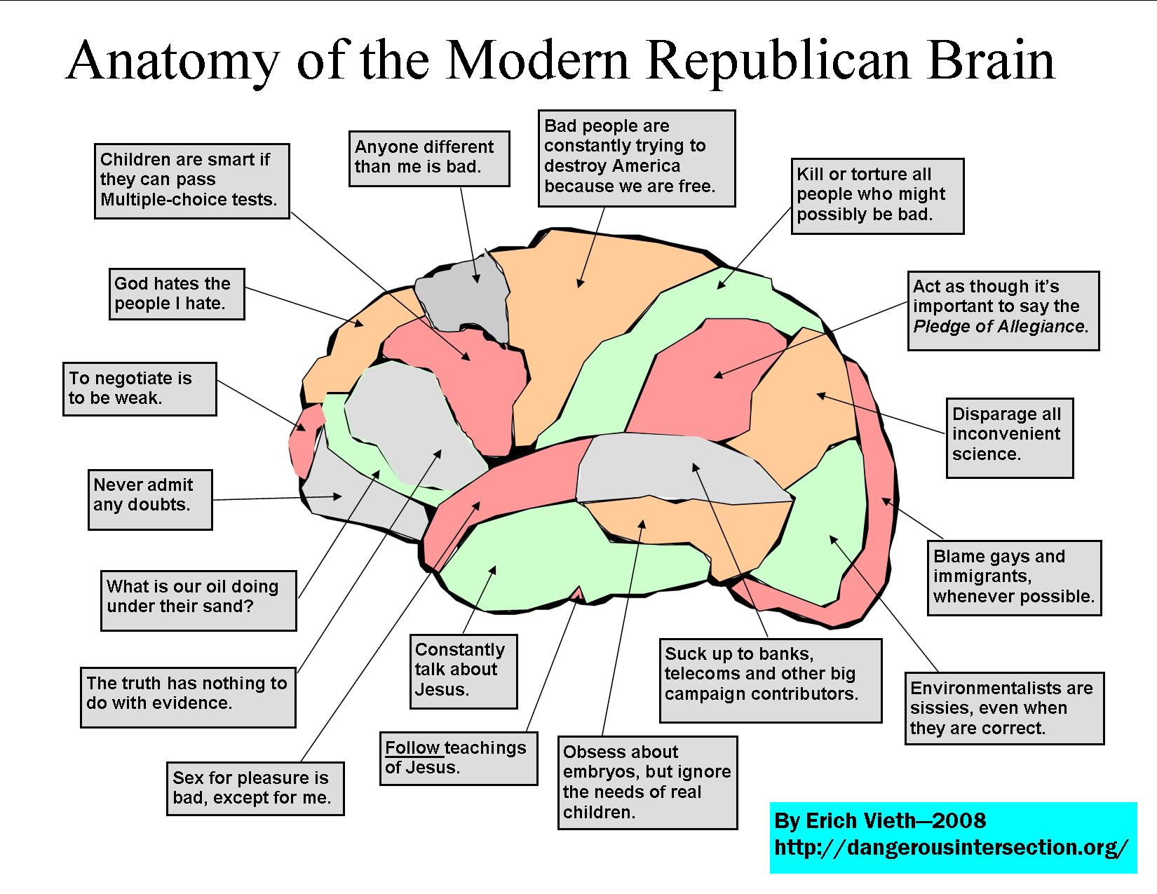 Anatomy the brain