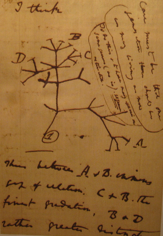 Darwin's impressive legacy in a nutshell