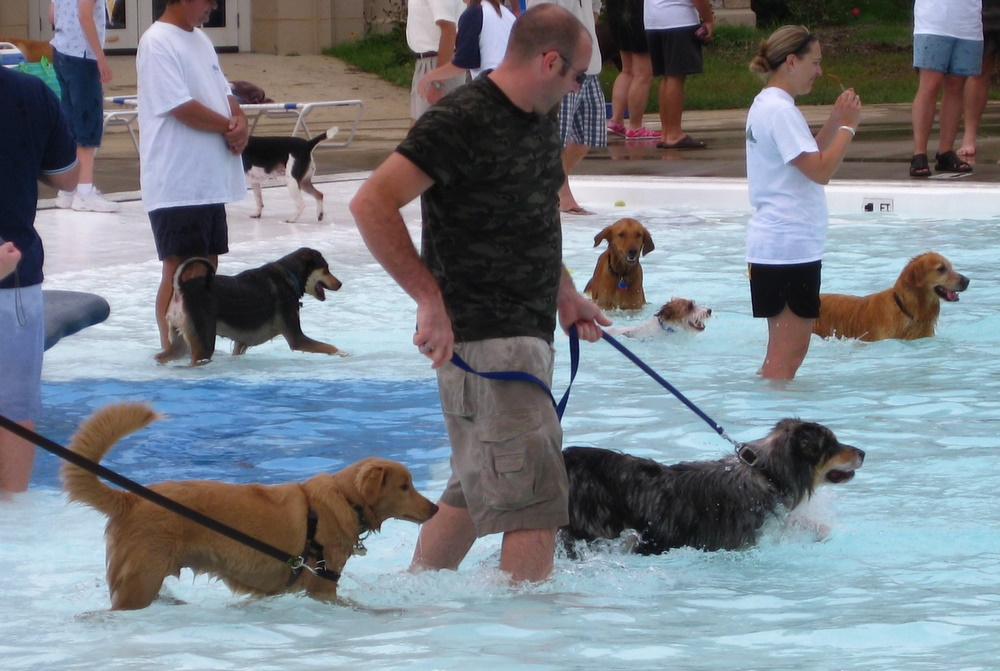Σκύλοι σε πισίνα....