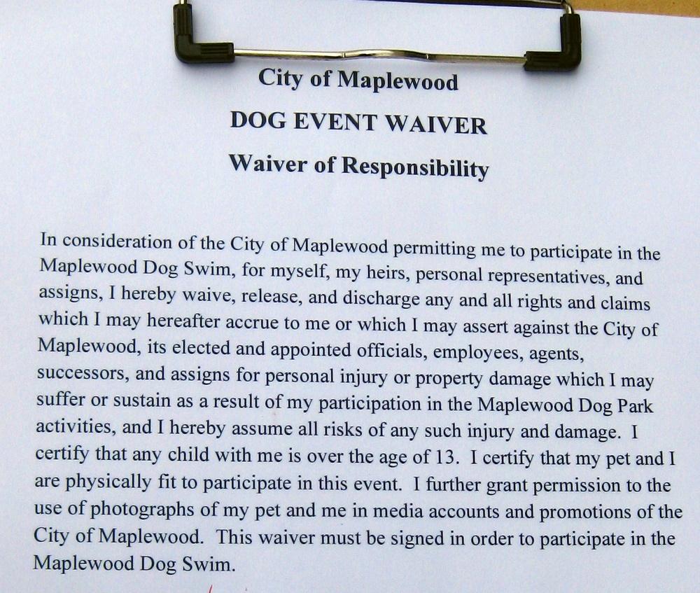 Dogs Take Over A Municipal Swimming Pool Dangerous