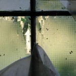 window-flies
