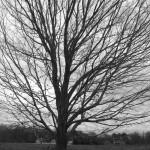 tree-b-and-w