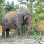 Greenwashing – Exhibit A:  Elephant Poo Poo Paper
