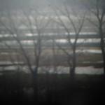 Eagle days on the Mississippi River