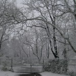 Snowy shades of gray