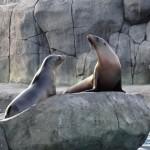 Zoo sea lions
