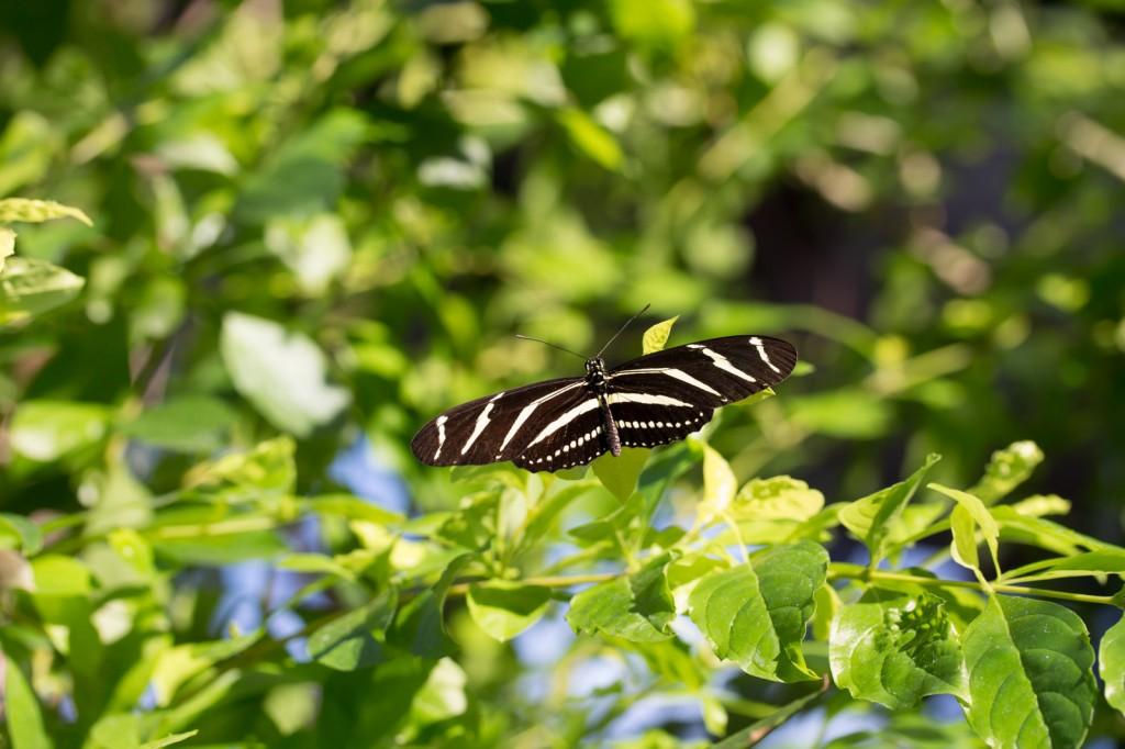 IMG_6814 Portraits - zoo ape butterflies