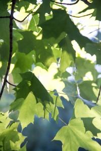IMG_2216 Leaves