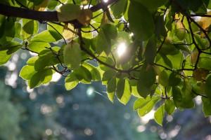 IMG_2261 Leaves 2