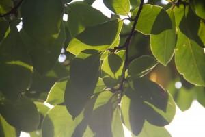 IMG_2299 Leaves 2