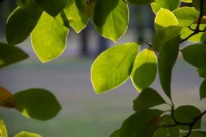 IMG_2321 Leaves 2