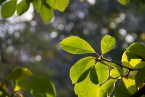 IMG_2324 Leaves 2