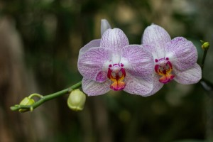 IMG_2274 orchids