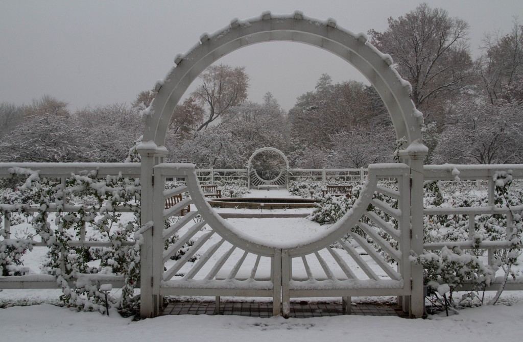 IMG_1390 MBG Snow